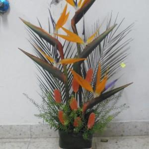 ציפורי גן עדן בשילובי פירות